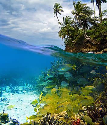 Inget slår dykning i Karibien