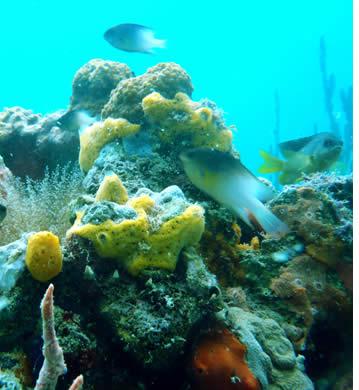 Det finns många dykplatser i Bocas del Toro, Panama