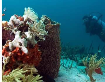 Dykning i Bocas del Toro, Panama