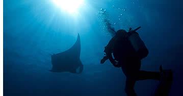 Dykningspriser i Bocas del Toro, Panama